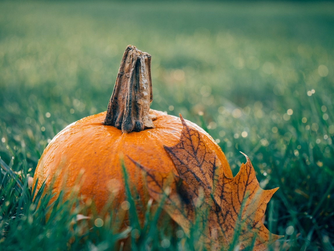 Pumpkin with leaf in grass resized
